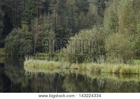 Beautiful summer landscape with a nature pond and trees