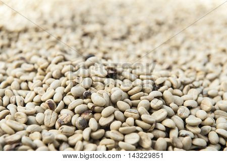 Green coffee bean from southern Laos on drying process