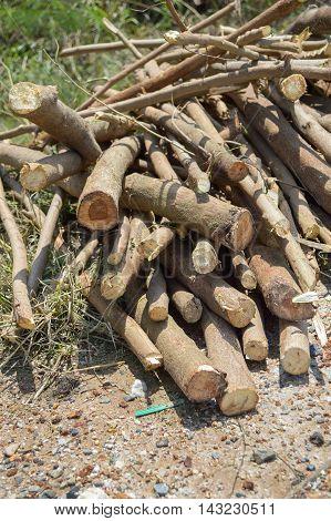 cut wood to burn on ground in garden