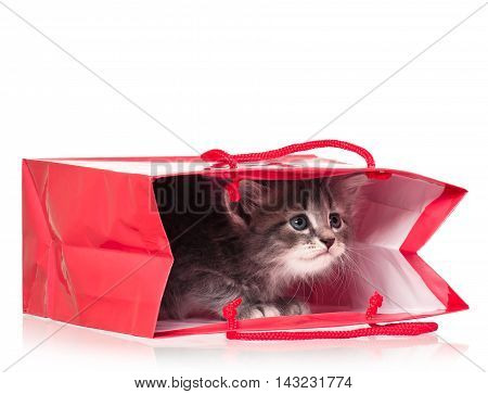 Cute little kitten in a gift bag isolated on white background