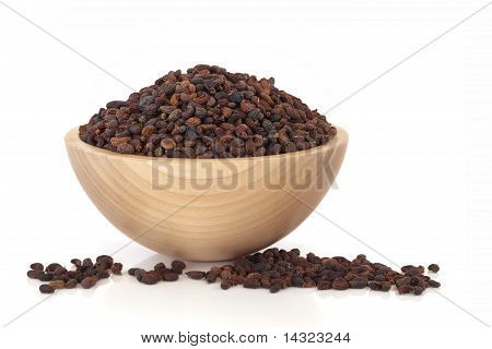 Privet Fruit Herbal Medicine