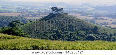 Colmer's Hill with pine trees in Marshwood Vale Devon