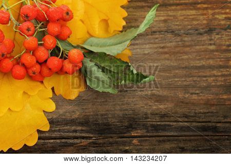 Rowan leaves and berries on wooden autumn background