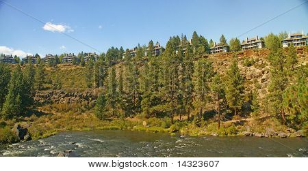 Ponderosa Pine, On Hillside Above The  River