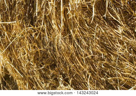 Straw For Horses