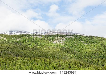 Evergreen covered mountains in the wilderness of Alaska