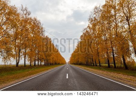 Beautiful perspective of the road with marking lines and golden trees along at fall with cloudy sky