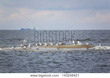 Cluster of seagulls sitting on a small island on the shores of the Baltic Sea, Poland