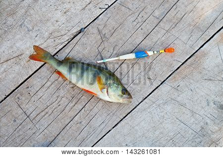 perch fishing bobber on a wooden background