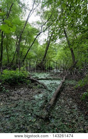 Swamp in the forest. Kinburn Spit Ukraine
