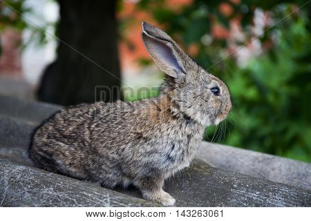 Gray rabbit, shallow depth of field, soft focus bunny macro view photo.