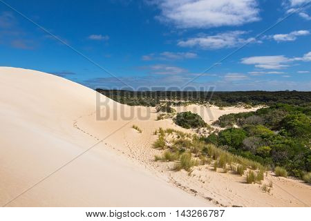 High sand hill ridge and drought tolerant plants with blue sky at Little Sahara white sand dune system on Kangaroo Island, South Australia