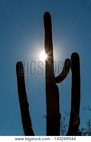 Cactus on sky background