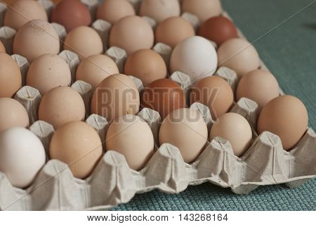 Eggs in cardboard box different sizes and colors with green background