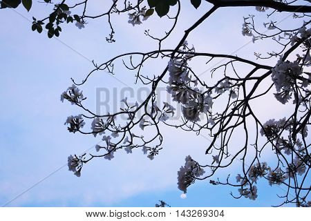 Tree branch and flowers bloom background and vector