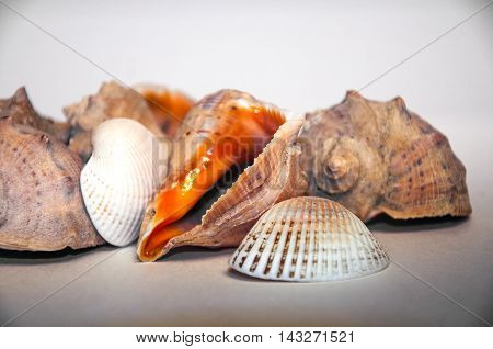 Sea Shells On The White Background