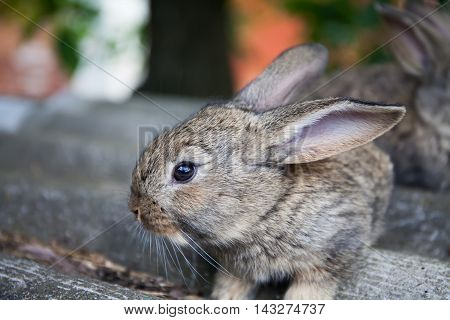fluffy bunny macro view photo. gray rabbit, shallow depth field, soft focus