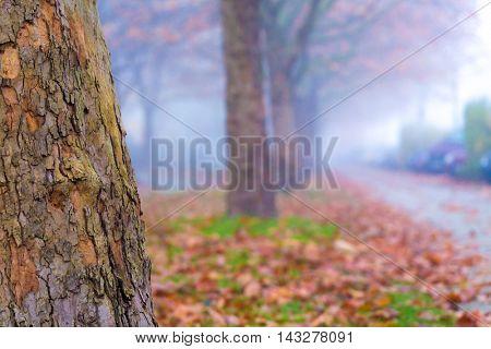 Autumn alley in fog