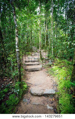 Footpath thru dense rainforest in Mossman Gorge, Queensland, Australia
