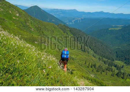 Hiker with a backpack goes on the grassy on a background of mountains. Back view. Beautiful sunny day in Carpathian.