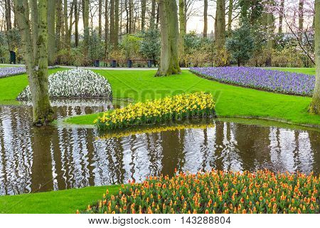 Flowerbed with red tulips and yellow daffodil flowers blooming in spring garden and river view