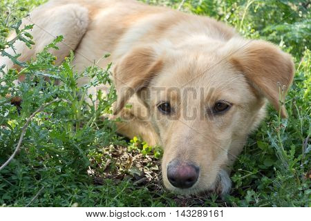 Cute red dog outdoor in nature view