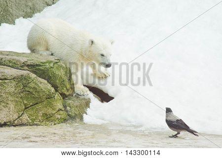 Teddy Bear And A Crow