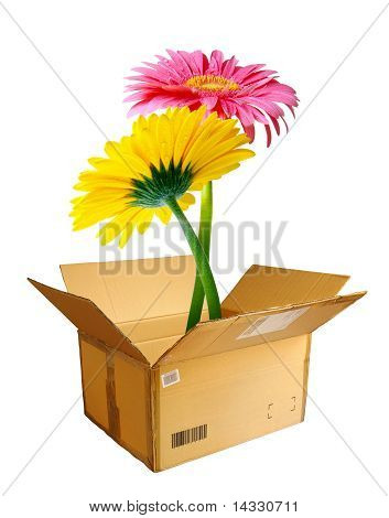 Packed Flowers