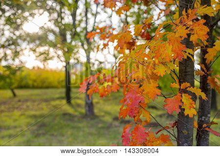 Closeup of colorful leaves against defocused background