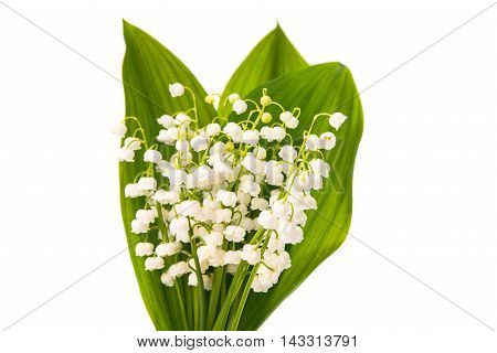 lilies of the valley on a white background