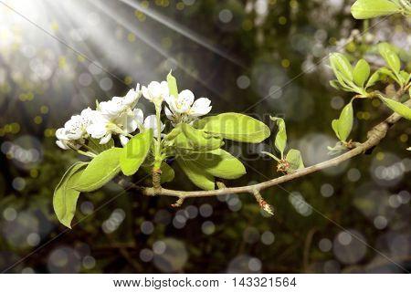 close up shot of spring blossom and light