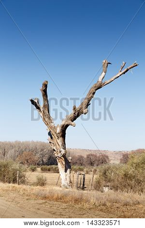 The Dead Tree - Nieu-bethesda Landscape