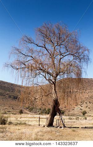 The Tree - Nieu-bethesda Landscape