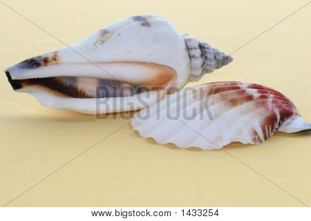 The Sea Shells