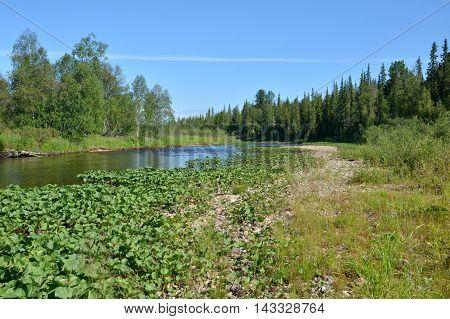 Virgin Komi forests. The national Park