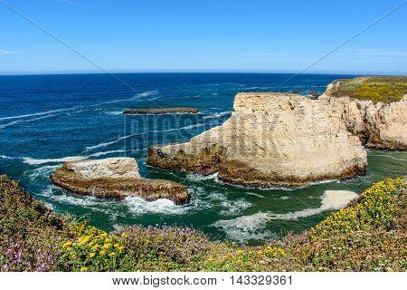 Santa Cruz Shark Fin Cove With Flower