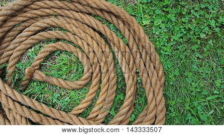 Coiled brown rope in grass and clover sod