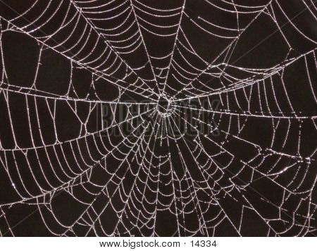 Spider's Mitt