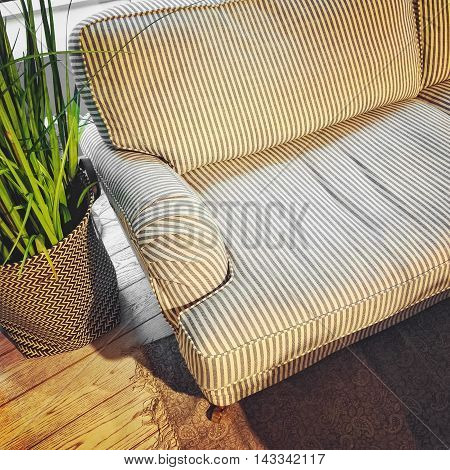 Room with comfortable striped sofa and plant decoration.