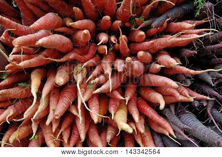 Bunches of orange and purple carrots pointing outwards in market stall