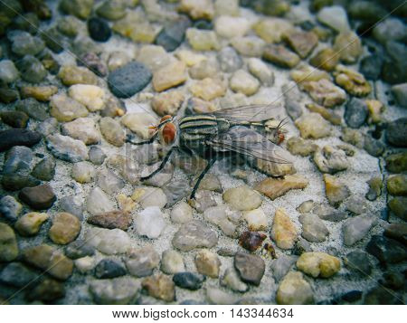 macro of big fly on stone with selective and soft focus.
