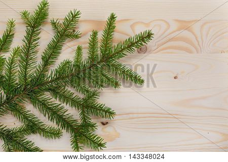 spruce branches wood texture for design christmas new year