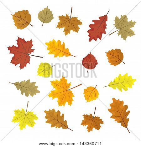 Set Of Colorful Autumn Leaves. Design Elements Vector Illustration. Leafs In Random. White Backgroun