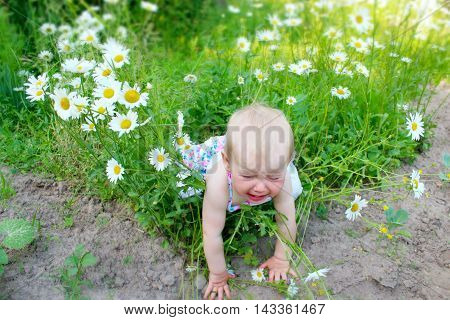 baby falls down in flower-bed of white beautiful chamomiles in the garden