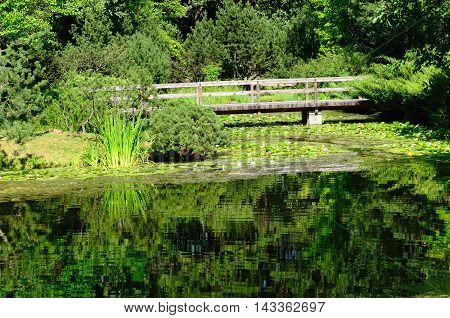 Pond and Bridge in the Summer Japanese Garden (Botanical Garden, Moscow, Russia)