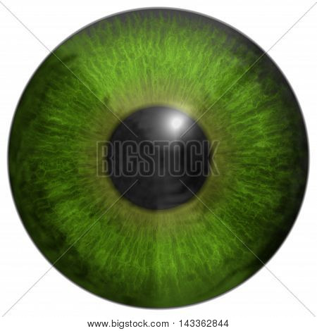 Eye iris generated hires texture, 3D illustration