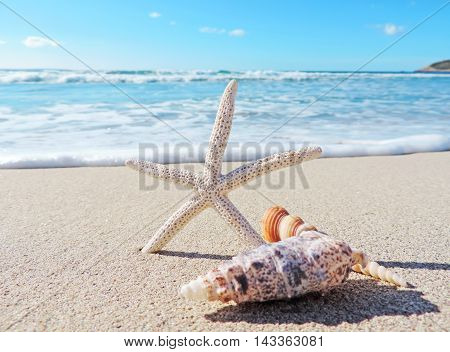 Conch shells and starfish at the beach with selective focus.
