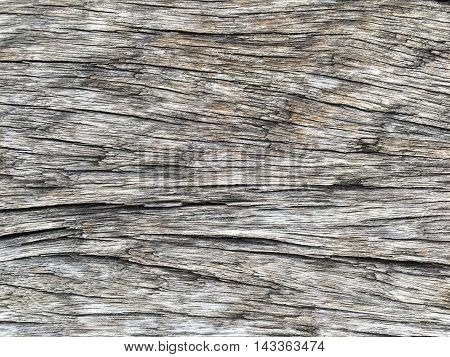close up wood surface tree texture and background