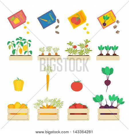 Vector set of growing vegetables: seed grains, vegetable patches and wooden boxes with beetroot, carrot, tomato and yellow pepper.