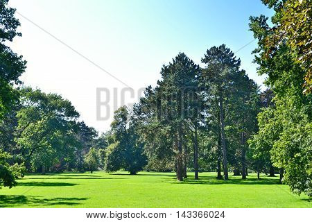 Summer meadow and forest in a park. Idyllic landscape.